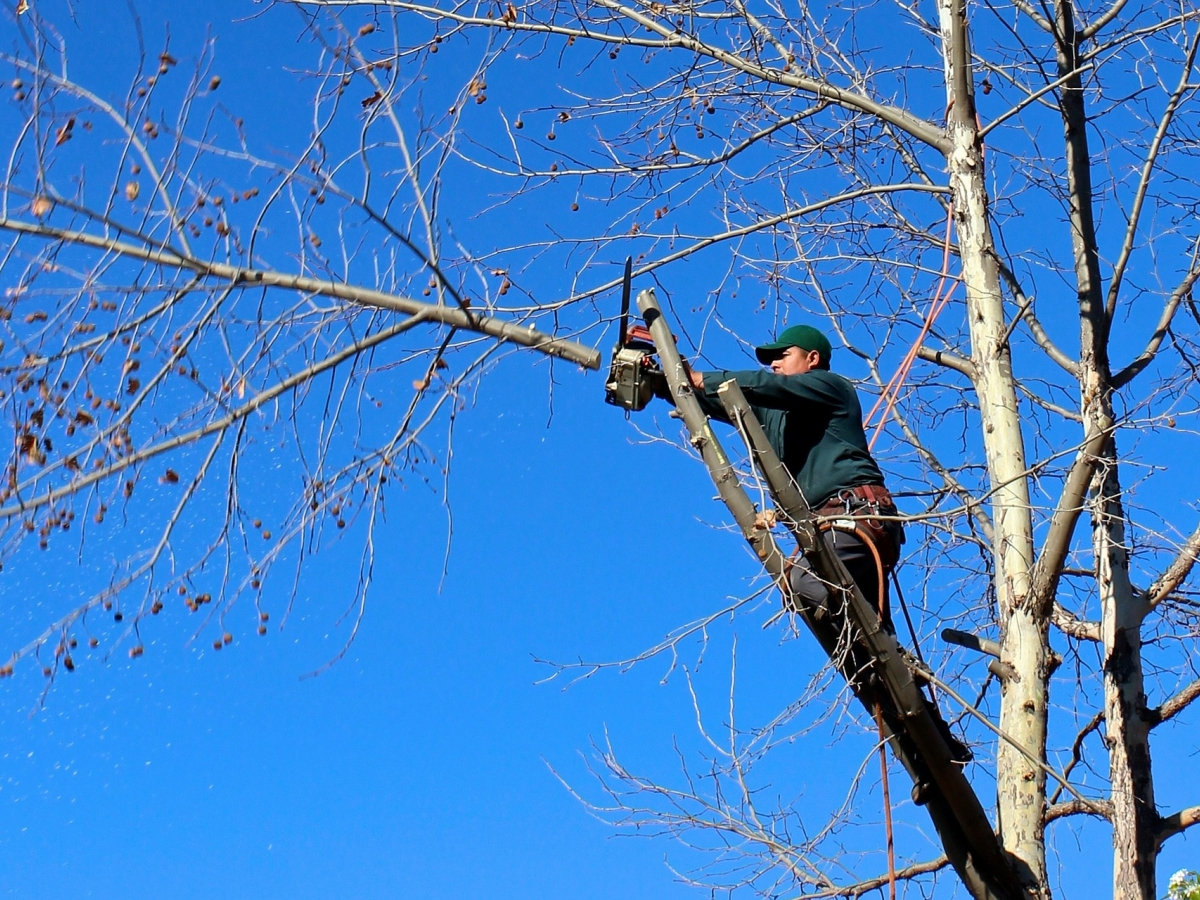 a man in a tree is using a chainsaw to trim a branch.